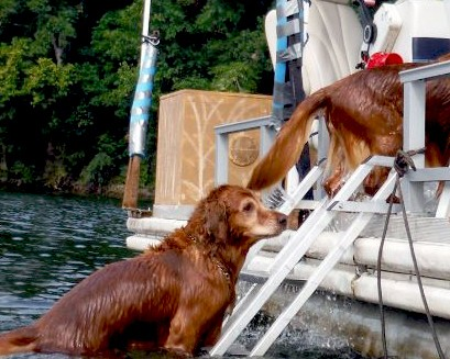 Boat Stairs for Dogs